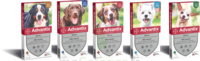 Advantix Solution externe chien moyen 10-25kg 4 Pipettes/2,5ml à Paris